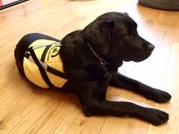 Udruga Krijesnica dobila terapijskog psa