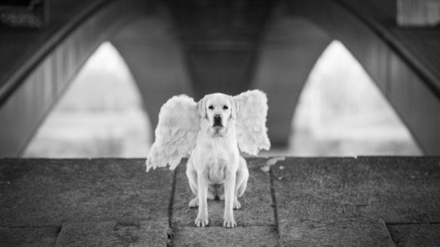 """Izložba """"Psi anđeli: Čovjekovi najbolji prijatelji"""""""